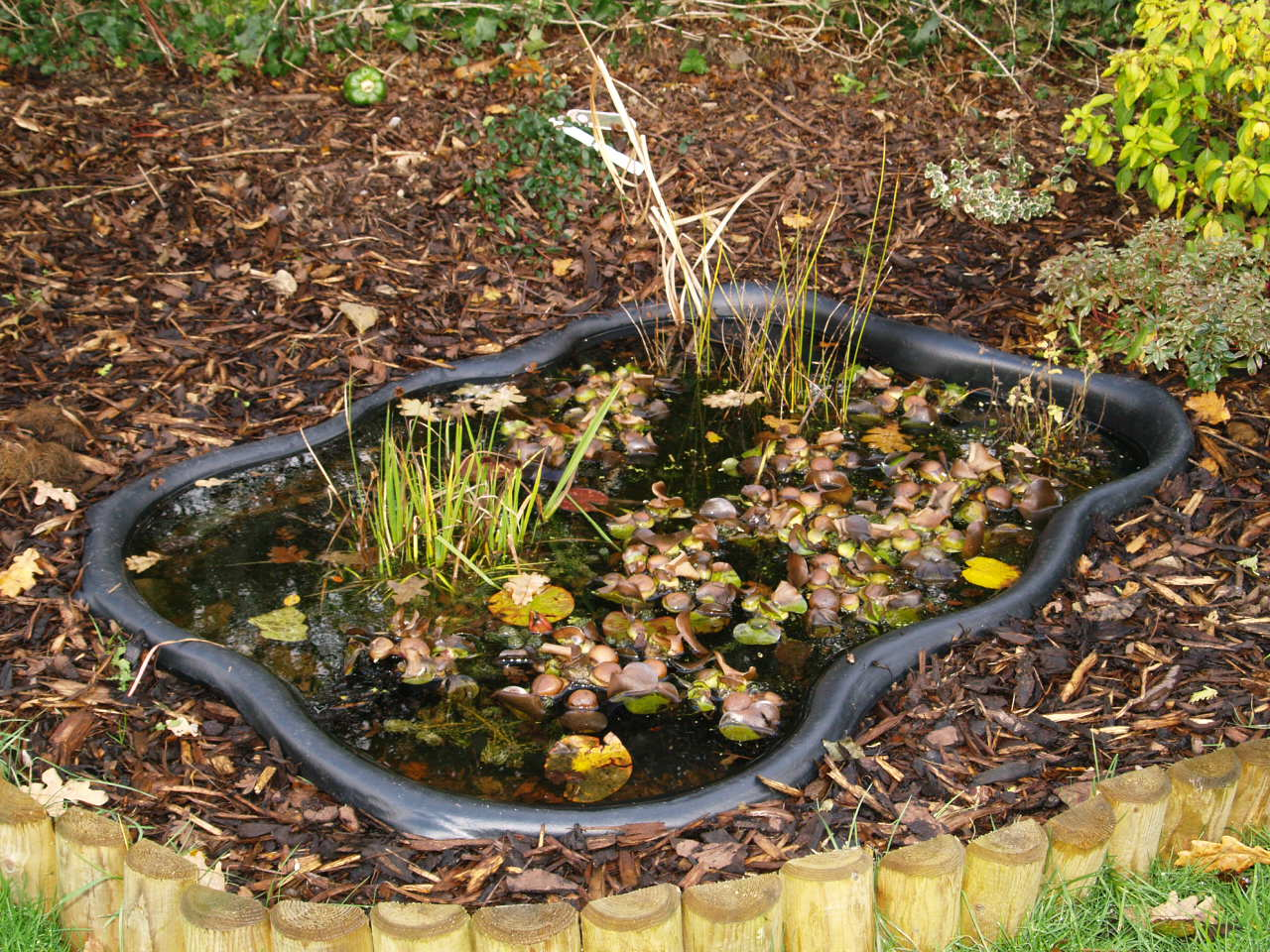 Wild life pond help building garden pond forums for Small pond liner